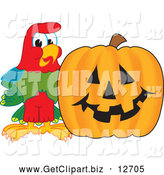 Clip Art of a Macaw Parrot with a Pumpkin by Toons4Biz