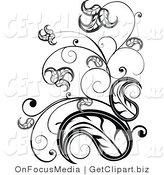 Royalty Free Vine Stock Designs