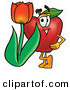 Clip Art of a Red Apple Character Mascot with a Red Tulip Flower in the Spring Looking Forward by Toons4Biz